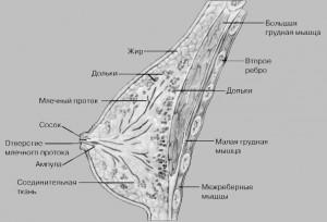 obrazovanie grudnogo moloka