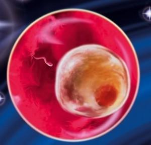 яйцеклетка с эмбрионом