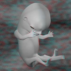 плод на одиннадцатой неделе беременности 3D