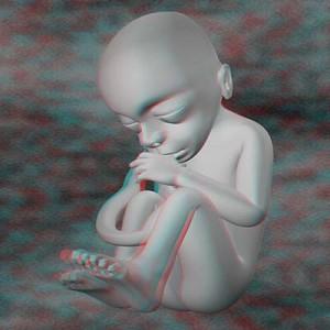 Плод на девятнадцатой неделе беременности 3D