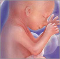 Плод на двадцатой неделе беременности