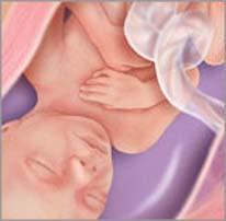 Плод на двадцать второй неделе беременности