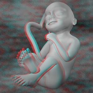 Плод на двадцать четвёртой неделе беременности 3D