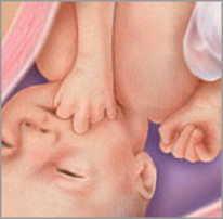 Плод на двадцать девятой неделе беременности