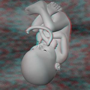Плод на тридцать восьмой неделе беременности 3D