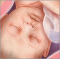 Плод на тридцать девятой неделе беременности