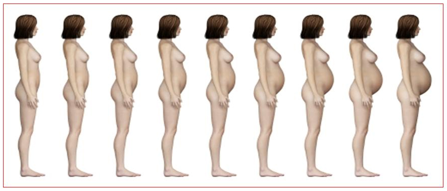 2 неделя беременности фото живота УЗИ и вес плода боли